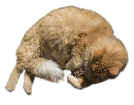 a fluffy orange cat Stock Photo - 386170