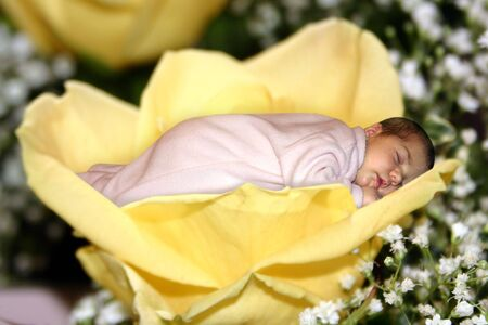 a baby taking a nap in a yellow rose Stock Photo - 414617