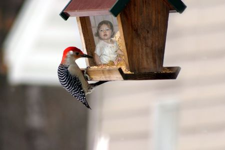 a little girl inside a bird feeder with a woodpecker outside Reklamní fotografie