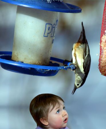 a little girl looking up at a nuthatch bird