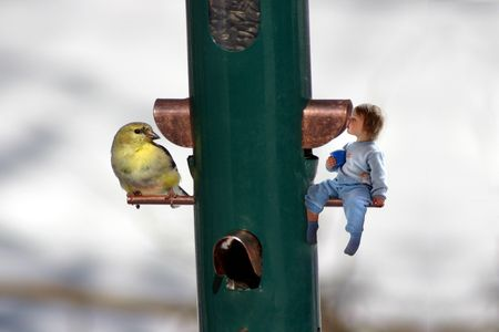 a little girl looking through a feeder at a bird 스톡 콘텐츠