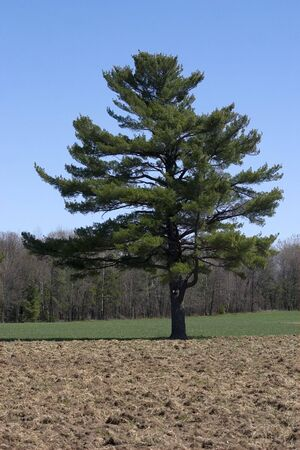a tree standing alone in a field Reklamní fotografie