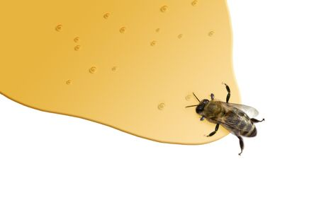 stinger: a bee standing in honey