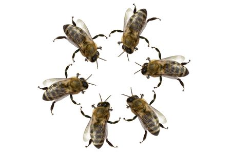 a group of bees in a circle