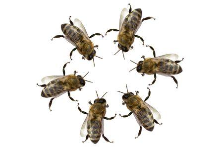 drones: un gruppo di api in un cerchio Archivio Fotografico