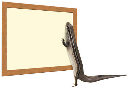 a skink lizard looking at a sign