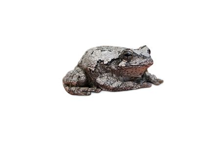 an isolated tree frog