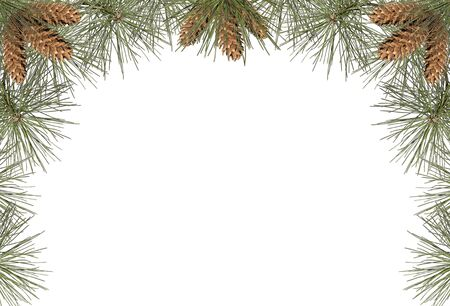 boarder: a frame of pine needles and pine cones