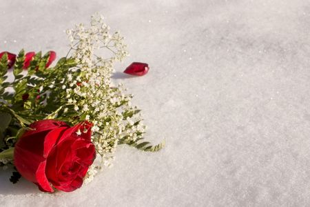 a red rose laying in the snow Stock Photo
