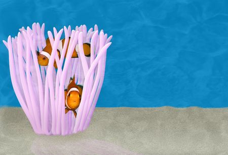 Two clown fish hiding in an anemone photo