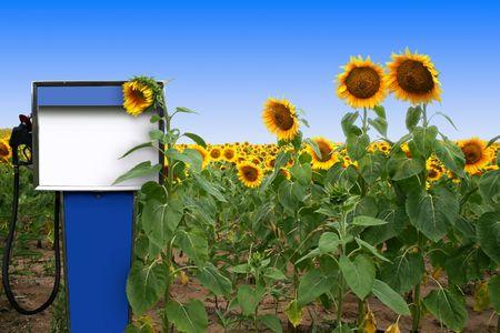 een oude gas tank in een veld met zonnebloemen Stockfoto