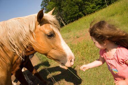 een klein meisje voeding een paard wat gras