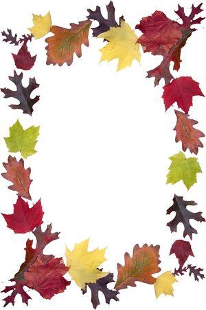 een frame een prachtig gekleurde herfstbladeren