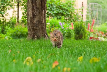 small cat is hunting on green grass Stock Photo - 3343097
