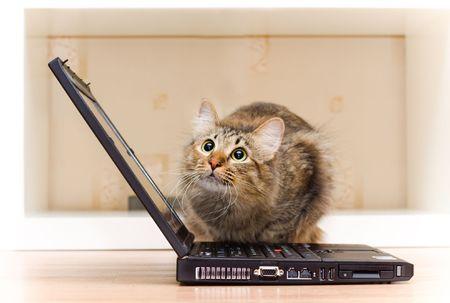 redheaded cat Stock Photo - 3438698