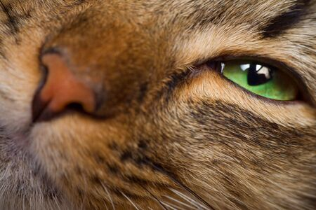 Cat green eye and nose macro shot Stock Photo - 3573980