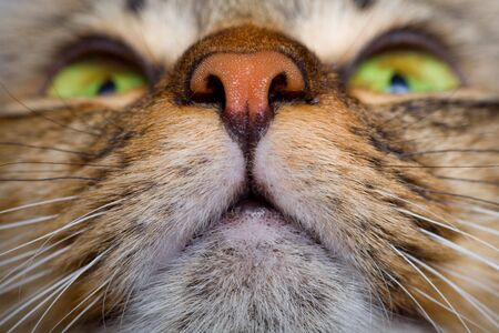 Cat mouth and pink nose close-up Stock Photo - 3573981