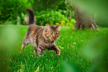 Small cat is hunting in green grass Stock Photo