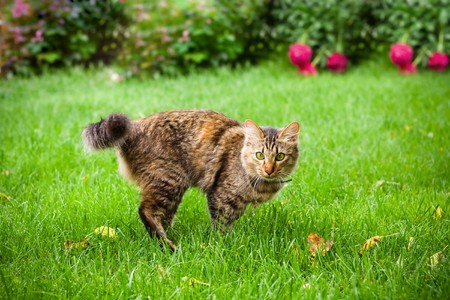 Small cat is running on green grass Stock Photo - 3959778