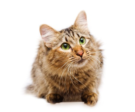 Cat with creen eyes sitting on white background Stock Photo - 4112834