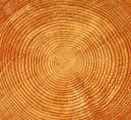 Tree trunk butt-end with multiple rings Stock Photo