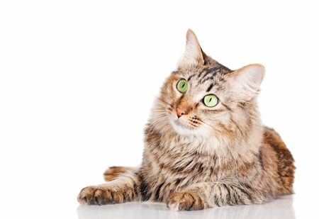 Cat lying on glass table on white background Stock Photo - 4649516