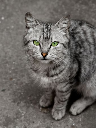 Small gray cat with green eyes Stock Photo - 5166609