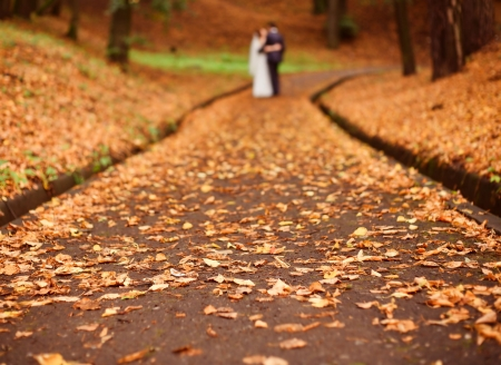 outdoor wedding: Road in park covered by dry leafs Stock Photo
