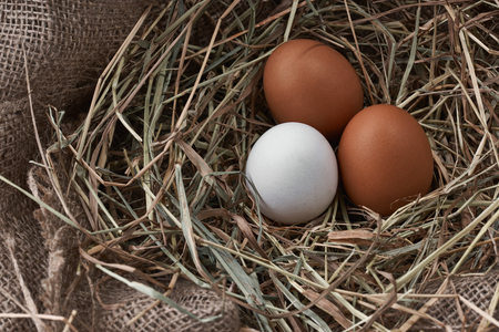 Ecological natural fresh bird eggs in a nest born on fabric Stock Photo