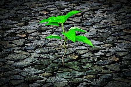 fissure: Petite plante de plus en plus d'une chaussée de pierre