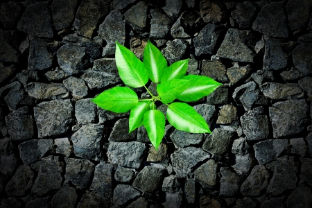 Small plant growing from a stone pavement photo