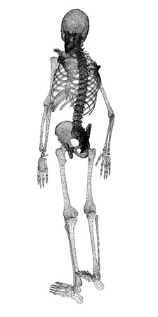 barebone: Human body, skeleton , body structure , wire model