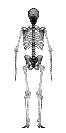 Human body, skeleton , body structure , wire model photo