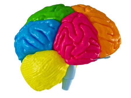 systems thinking: 3 D model brain in different projections Stock Photo