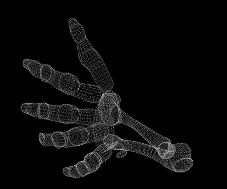 x ray image: Human body, hand , body structure , wire model