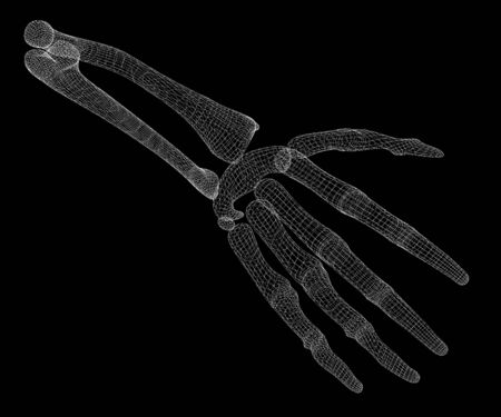 ulna: Human body, hand , body structure , wire model