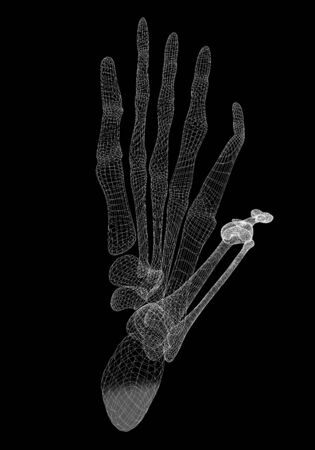 x ray image: Human body, leg , body structure , wire model