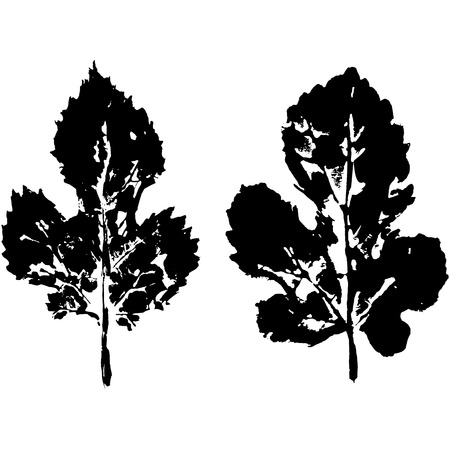 shrubs: footprint leaves from trees and shrubs Isolated on background .