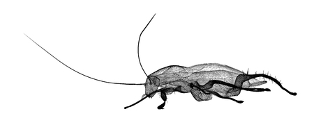 cockroach body structure isolated on a background