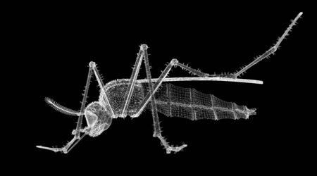 gnat body structure isolated on a background