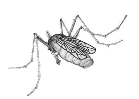 Mosquito in wire carcass isolated on a white background Stock Photo