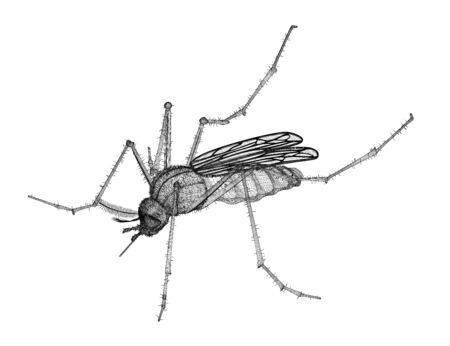 mosquito in wire carcass