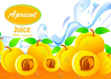 Apricot fresh juice of ripe fruit. Editable vector image.