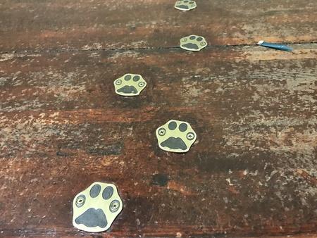 猫の散歩 写真素材