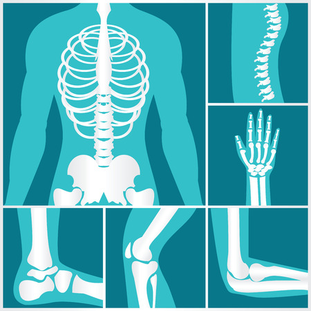 Set of xray of human skeletal, human joints, knee joint, elbow joint, ankle joint, wrist, skeletal spinal bone structure of Human Spine, emblem or sign of medical diagnostic center or clinic, flat vector illustration. Illustration