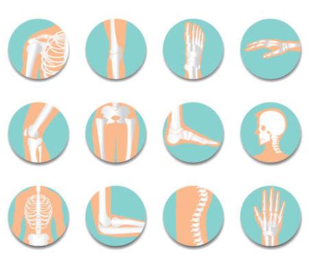 Orthopedic and spine icon set on white background, bone x-ray image of human joints, anatomy skeleton flat design vector illustration. Illustration