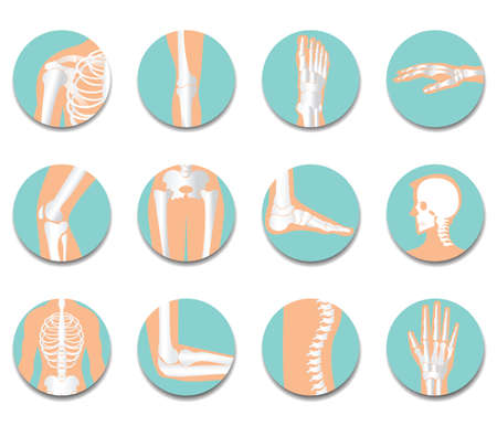 Orthopedic and spine icon set on white background, bone x-ray image of human joints, anatomy skeleton flat design vector illustration. Illustration