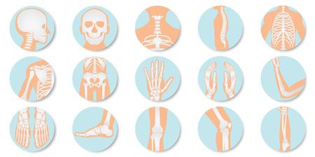 Orthopädische und Skelettikone gesetzt auf weißem Hintergrund, Knochenröntgenbild der menschlichen Gelenke, flache Designvektorillustration des Anatomieskeletts.