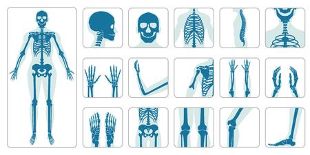 Human bones orthopedic and skeleton icon set on white background, bone x-ray image of human joints, anatomy skeleton flat design vector illustration. Vektorové ilustrace