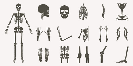 Human bones orthopedic and skeleton silhouette collection set on white background, bone x-ray image of human joints, anatomy skeleton flat design vector illustration. 일러스트